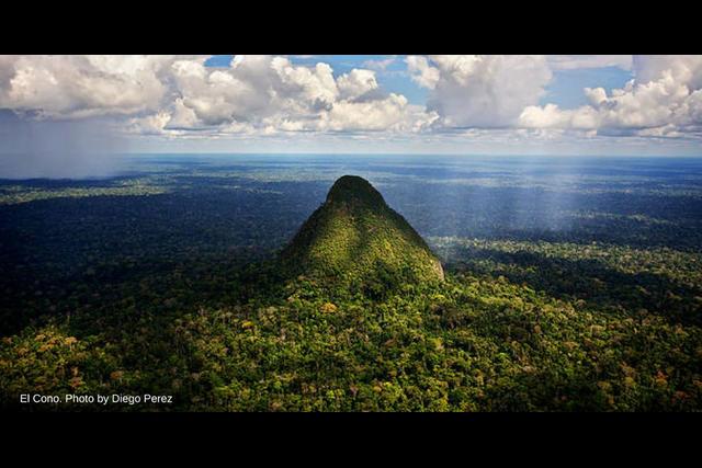 El Divisor (www.rainforesttrust.org)
