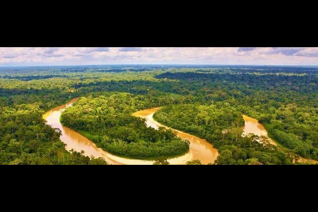 Rainforests 1 (www.rainforesttrust.org)