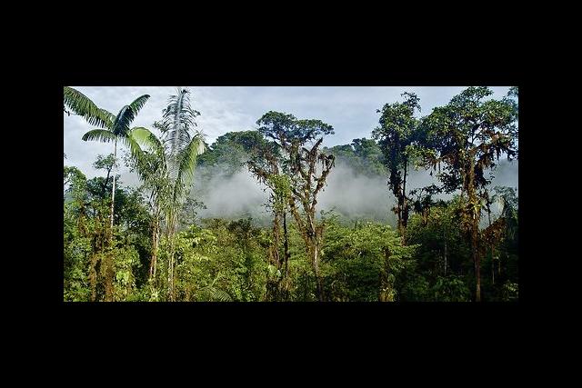 rainforests 2 (www.rainforesttrust.org)