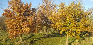 Trees (Keith Melton)