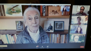 Jane Goodall talking at Green Lib Dems virtual conference June 2020 (Brian Mathew)