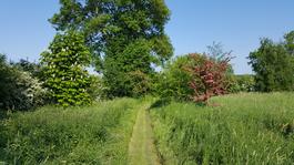 Field pathway (Keith Melton)