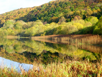 Galloway Loch & Woodland (Stuart Littlewood)